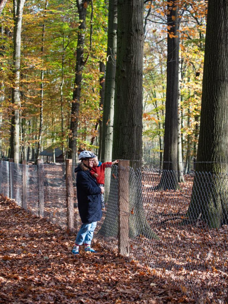 Dortmund mit Kindern | 7 Gründe, warum der Süggelwald Unser Lieblings-Ausflugsort in Dortmund ist
