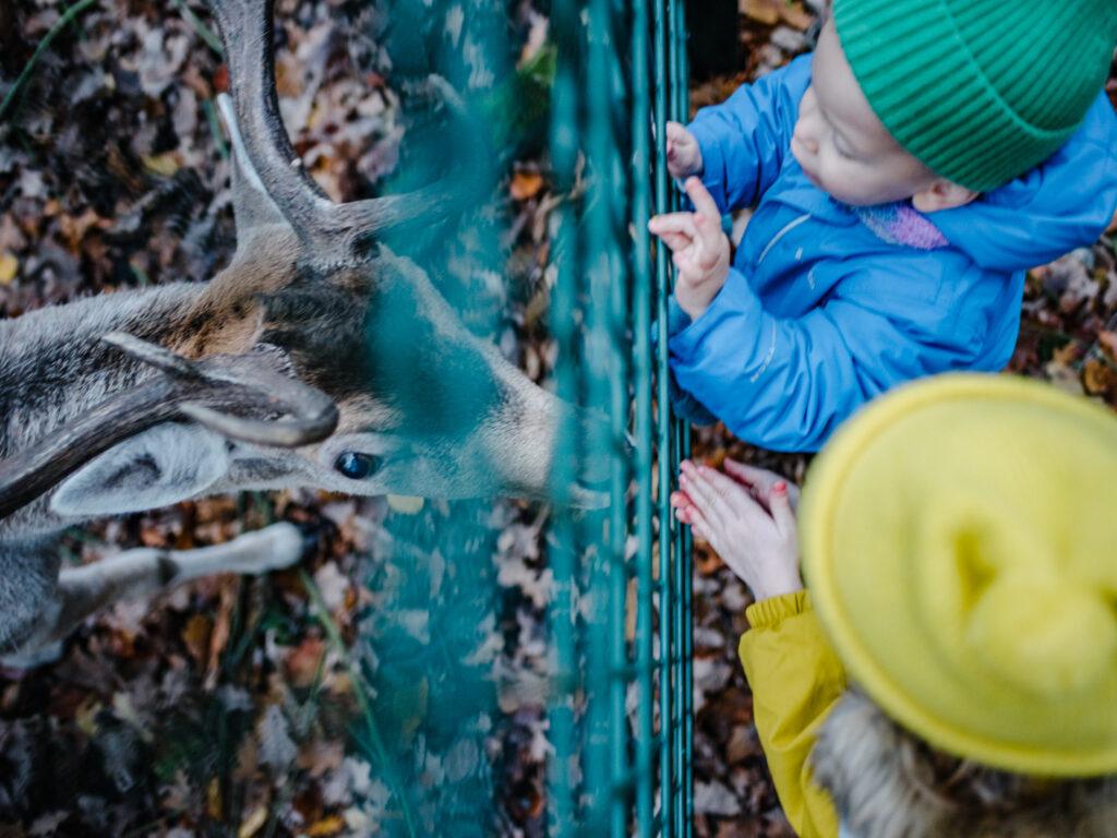 Dortmund mit Kindern |  Ausflugstipp für die Ganze Familie: Wildgehege Grutholz