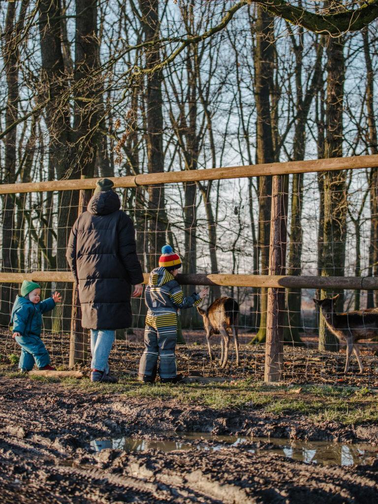 Ausflugsziel mit Kindern in der Nähe von Dortmund: Wildschweingehege Buschkämpken