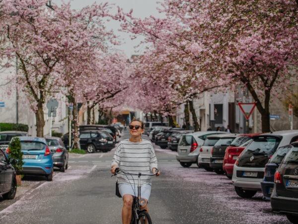 Krokusse, Magnolien, Kirschblüten: 13 Orte, an denen der Frühling in Dortmund besonders schön ist