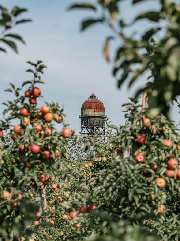 Äpfel in Dortmund selber pflücken - Hof Mertin
